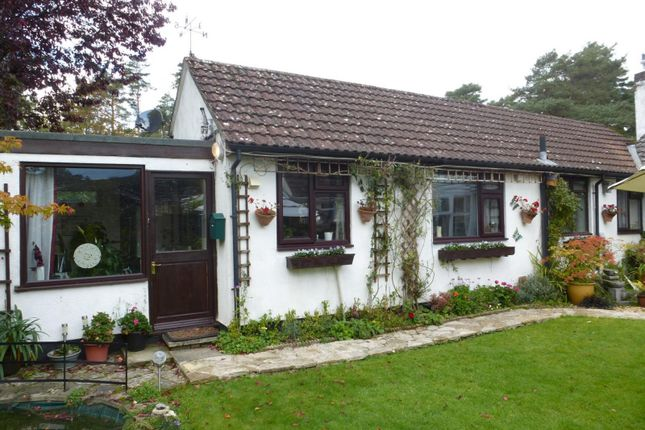 Thumbnail Bungalow to rent in Horton Road, Ashley Heath, Ringwood
