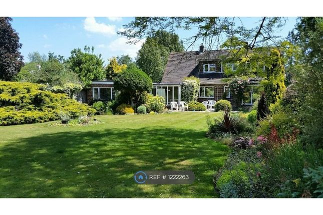 Thumbnail Detached house to rent in Highleigh Road, Highleigh, Chichester