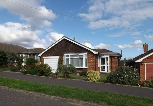 Thumbnail Detached bungalow to rent in Millham Close, Bexhill-On-Sea, East Sussex