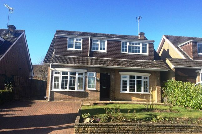 Thumbnail Detached house to rent in Badger Drive, Lightwater