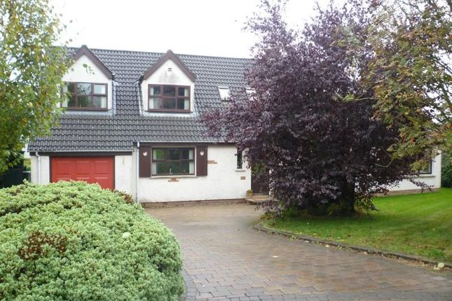 Thumbnail Detached house to rent in Birch Meadow, Newtownabbey