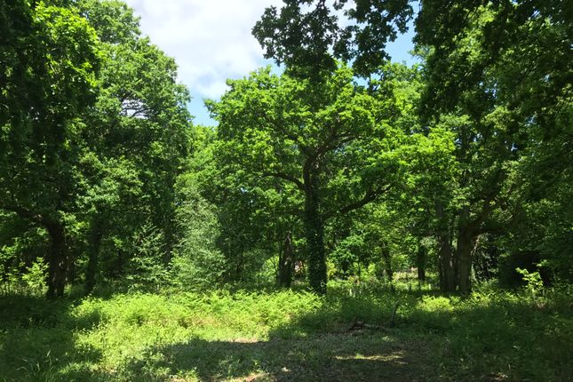 Thumbnail Land for sale in Park Wood, Hellingly