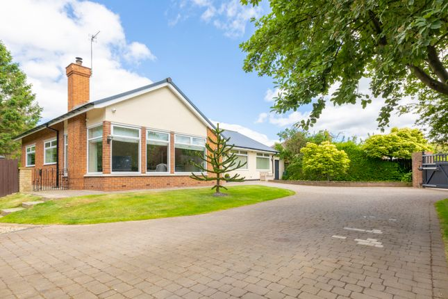 Thumbnail Bungalow for sale in Low Lane, Acklam, Middlesbrough