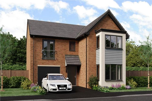 """Thumbnail Detached house for sale in """"The Seeger"""" at Bristlecone, Sunderland"""