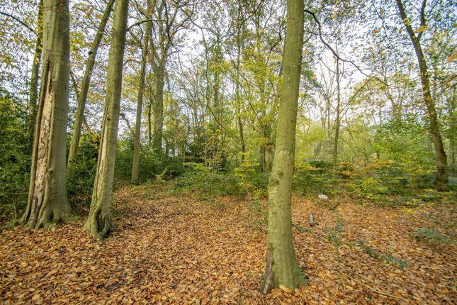 Woodland of Beechwood Close, Crays Pond, Reading RG8