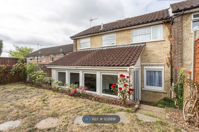 Thumbnail Semi-detached house to rent in Alyssum Walk, Colchester