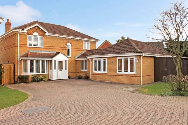Thumbnail Detached house for sale in Twinstead, Wickford