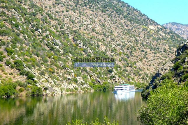 Thumbnail Farm for sale in Property 90 Ha, Vineyard, Houses, Winery, Douro River, Portugal