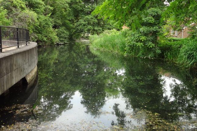 Adjacent To River: