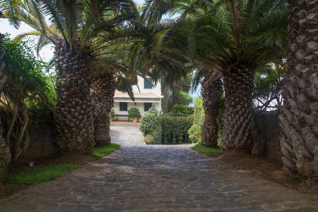 Mature Palms Flank The Driveway