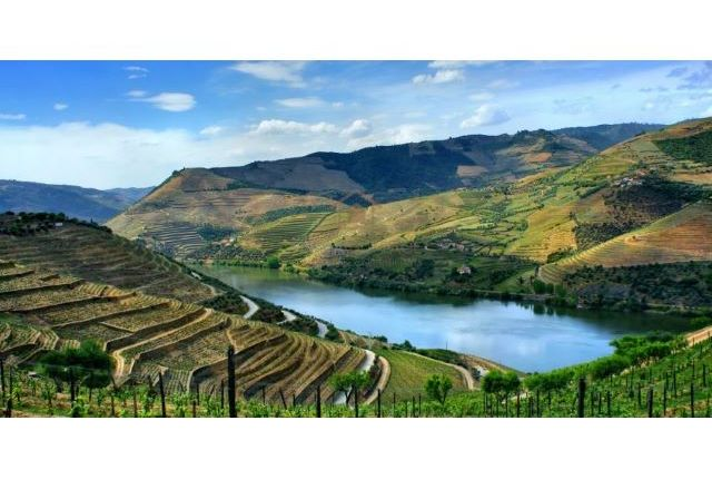 Thumbnail Farm for sale in Douro Estate, Peso Da Régua, Vila Real, Norte, Portugal