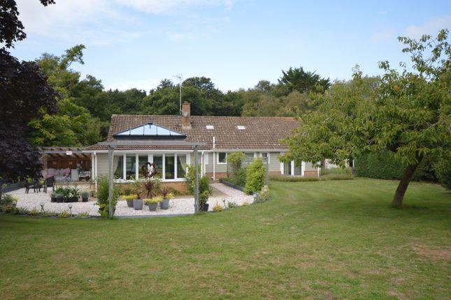 Thumbnail Detached bungalow for sale in East Winch Road, Ashwicken, Kings Lynn, Norfolk