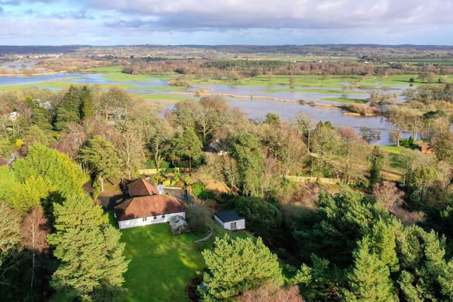 Thumbnail Detached bungalow for sale in Chapel Rise, Ringwood