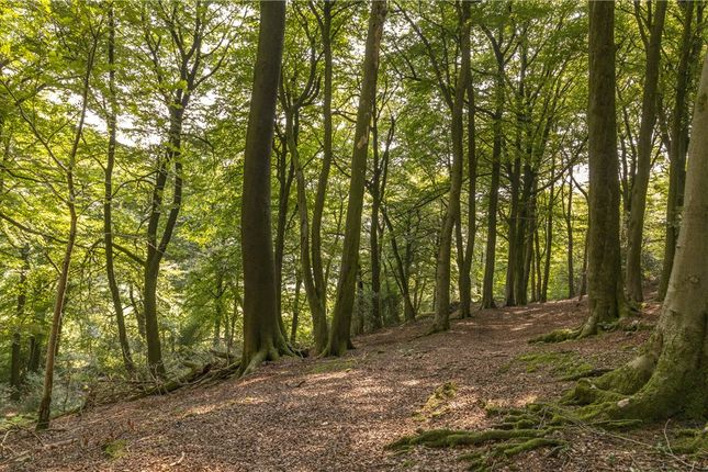 Woodland of Blacko Bar Road, Roughlee, Nelson BB9