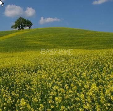 Land for sale in Mougins, 06250, France