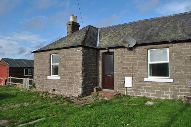 Thumbnail Semi-detached bungalow to rent in Cottage 2 Powis Powis, By Montrose, Montrose