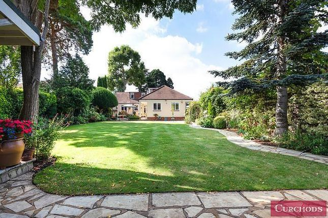 Thumbnail Property for sale in Staines Road, Laleham