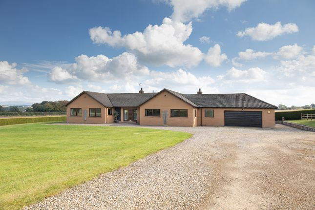 4 bed detached bungalow to rent in Hillside Farm Bungalow, Southwaite, Carlisle, Cumbria CA4