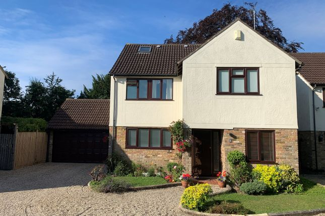 Thumbnail Detached house for sale in Phoenix Grove, Chelmsford
