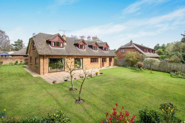 Thumbnail Detached house for sale in Birch Close, St. Leonards, Ringwood