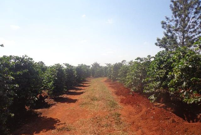 Thumbnail Farm for sale in Kiambu, Kirigiti, Kenya