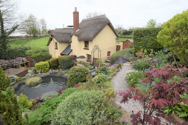 Thumbnail Cottage for sale in Crediton