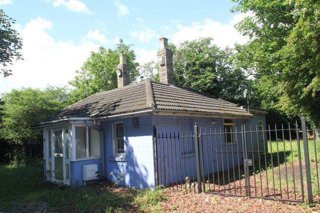 Thumbnail Detached bungalow for sale in Halstead Road, Colchester