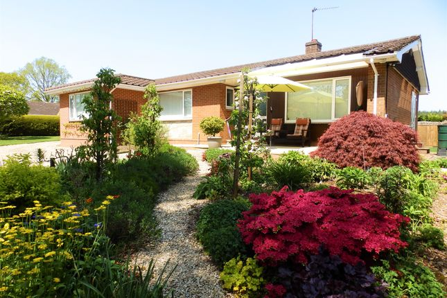 Thumbnail Detached bungalow for sale in Pinefields Close, West Hill, Ottery St. Mary