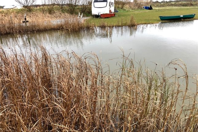 Houses for sale in humber side lane easington hull hu12 for Pond reeds for sale