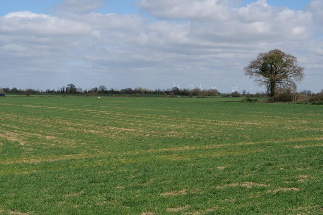 Thumbnail Land for sale in Hall Road, Asheldham, Southminster