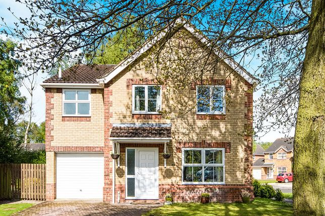 Thumbnail Detached house for sale in Sycamore Crescent, Lincoln