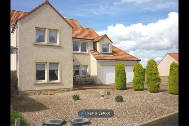 Thumbnail Detached house to rent in Aitken Place, Coaltown Of Wemyss, Kirkcaldy