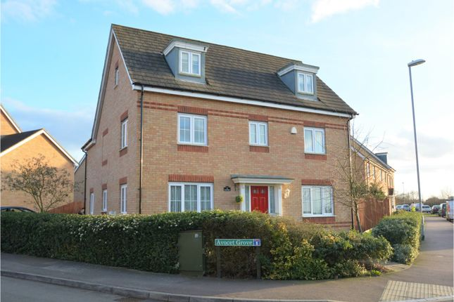Thumbnail Detached house for sale in Avocet Grove, Soham