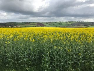 Thumbnail Land for sale in Bromsash, Ross On Wye