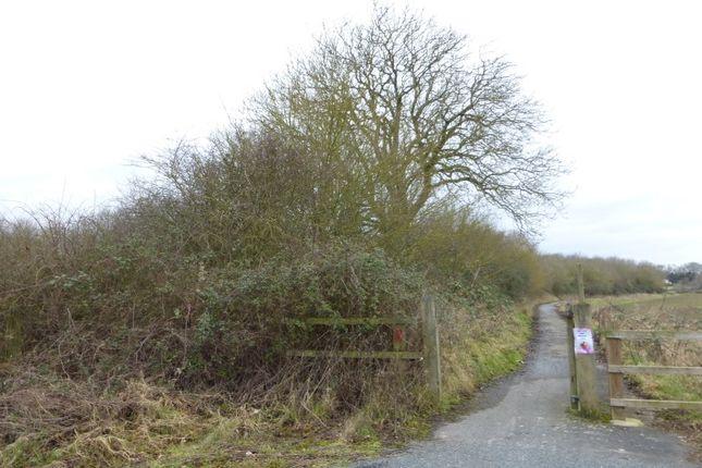 Thumbnail Land for sale in Land Adj, Norwich Road, Kirstead, Norwich, Norfolk