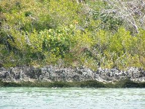 Land for sale in Lubbers Quarters Cay, Abaco, The Bahamas