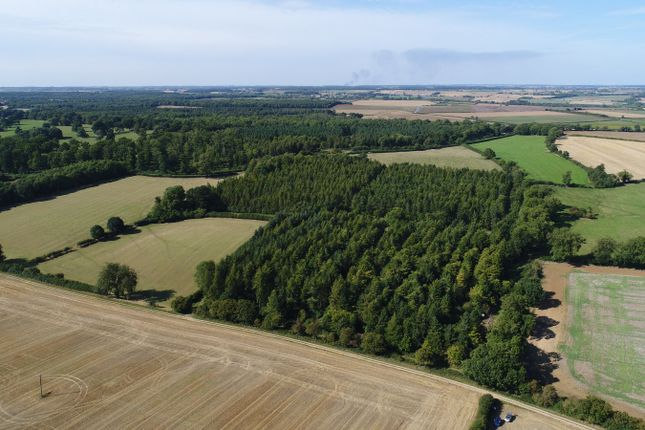 Woodland In Rutland