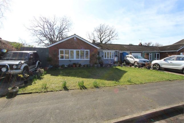 Thumbnail Detached bungalow for sale in Weavers Close, Colchester