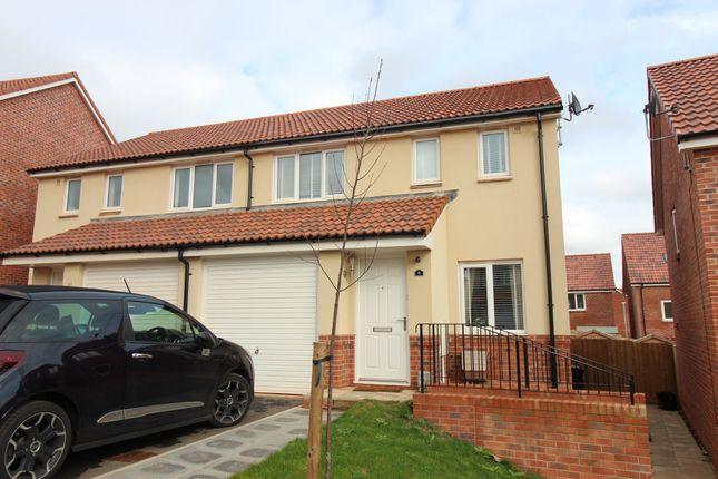 Thumbnail Semi-detached house to rent in Alfriston Road, Paignton