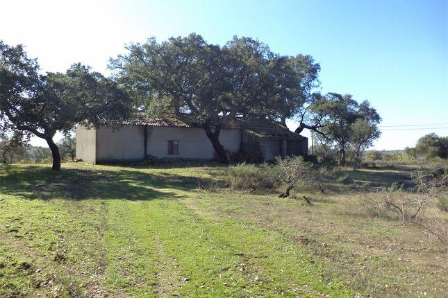 Farm for sale in Castelo Branco, Portugal, Castelo Branco (City), Castelo Branco, Central Portugal