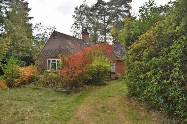 Thumbnail Detached bungalow for sale in Lime Avenue, Camberley