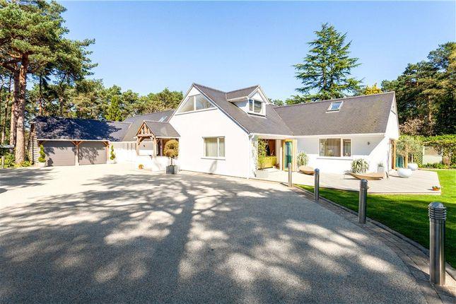 Thumbnail Detached bungalow for sale in Avon Castle, Ringwood, Hants