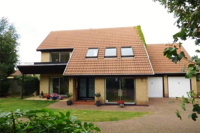 Thumbnail Detached house for sale in Chisenhale, Orton Waterville, Peterborough, Cambridgeshire