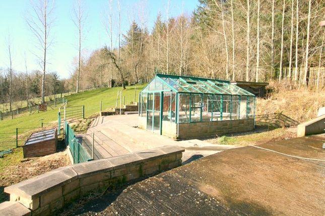 Garden of East Lodge, Cambusnethan Priory, Wishaw ML2