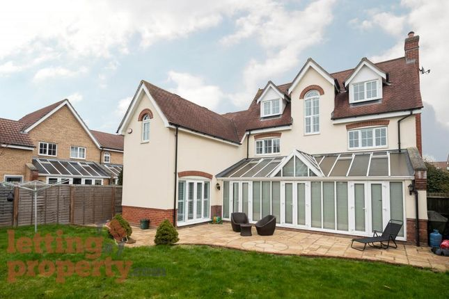 Thumbnail Detached house to rent in Grantham Avenue, Great Notley, Braintree