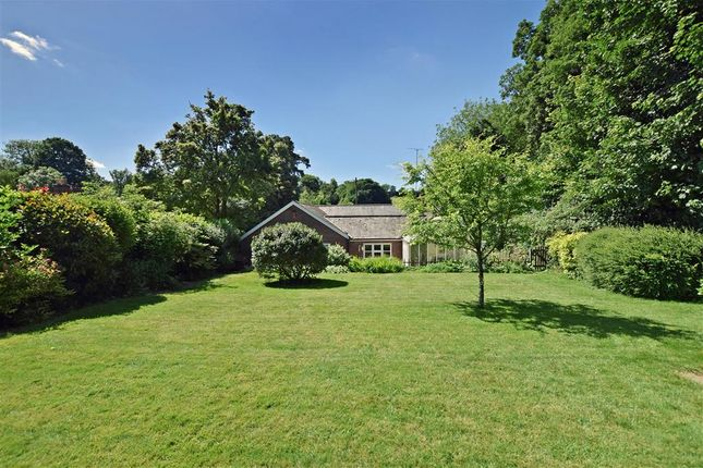 Thumbnail Detached bungalow for sale in High Street, West Meon, Hampshire