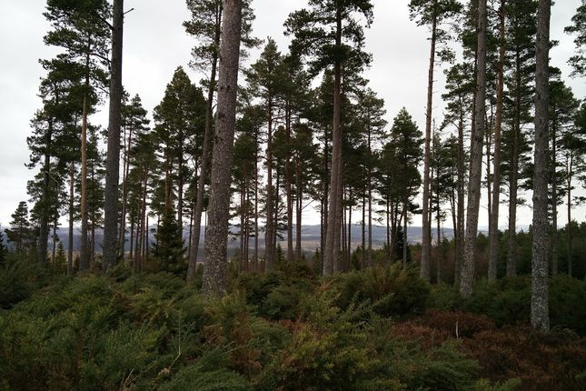 Thumbnail Land for sale in Kiltarlity, Nr Inverness