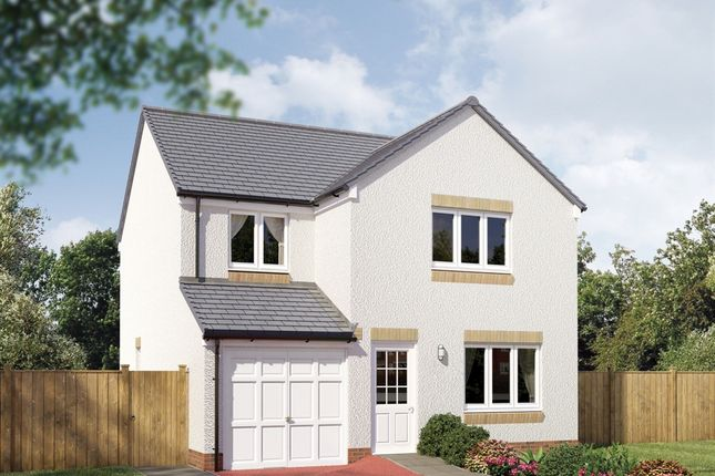 "Thumbnail Detached house for sale in ""The Leith"" at Hamilton Road, Larbert"