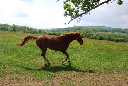 Thumbnail Equestrian property for sale in Rilhac-Lastours, Haute-Vienne, France