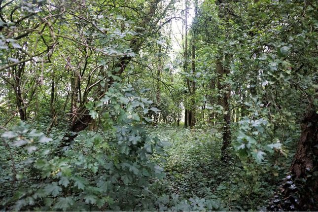 Woodland of Nixon's Court, Leyland PR26